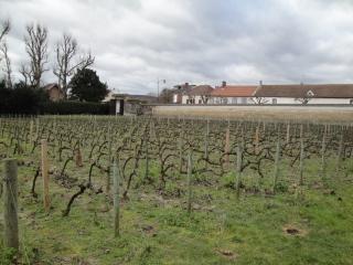 Jacquesson 20140207 vingård